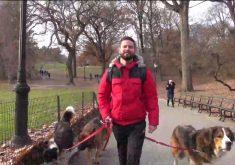 Bruno Uchôa trabalha passeando com cachorro em Nova York (FOTO: Reprodução TV Jangadeiro)