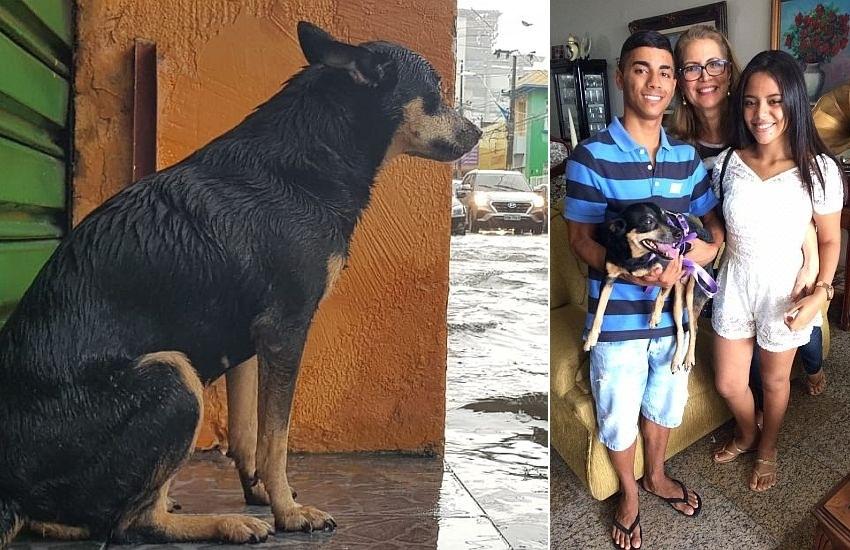 Dono reencontra cadelinha que viralizou durante chuva no Centro de Fortaleza