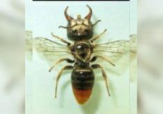 Hugo Fernandes comenta sobre a existência de uma abelha gigante (FOTO: Reprodução TV Jangadeiro)